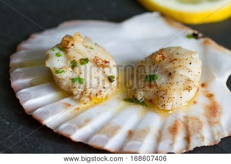 Seared scallops with garlic and parsley on shell closeup
