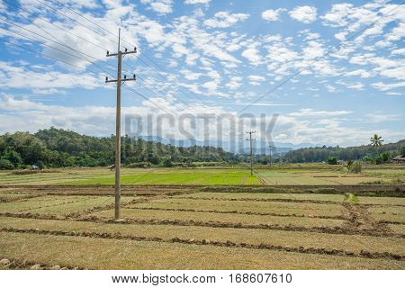 Electric Pole on rice field in Thailand