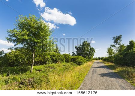 A road leading through wide moor landscape with some trees in the High Fens Eifel Belgium with blue sky. poster