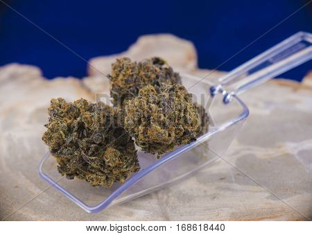 Detail of cannabis buds (deep purple strain) on clear scooper - medical marijuana dispensary concept