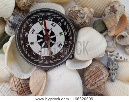Background On Travel With A Compass And Seashells