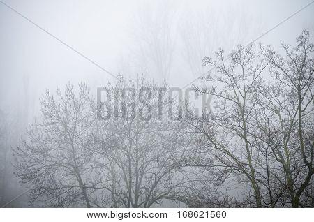 bleak trees in foggy and misty winter landscape scenery