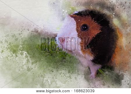 Cute guinea pig Water color, with the color green for some grass.