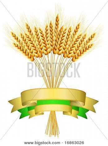 Package desing. Vector illustration of ears of wheat and ribbons on white background.