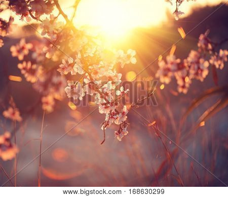 Spring blossom background. Beautiful nature scene with blooming tree and sun flare. Sunny day. Spring flowers. Beautiful Orchard. Abstract blurred background. Easter, Springtime.