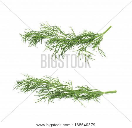 Single branch of the dill herb isolated over the white background, set of two different foreshortenings