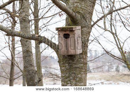 Little bird house on a tree in winter park