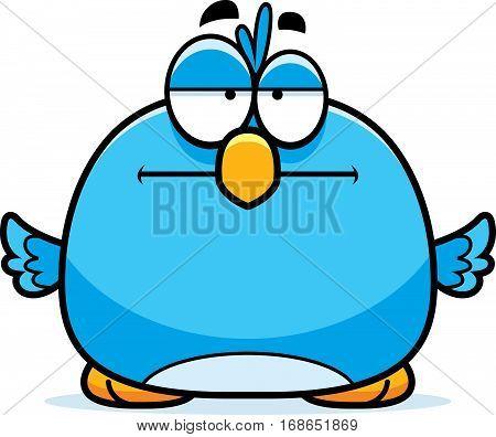 Bored Little Bluebird