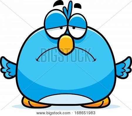 Sad Little Bluebird