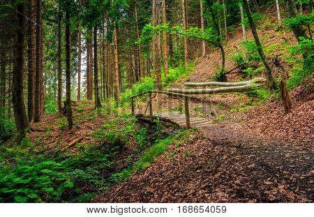 Wooden Bridge In Pine Forest