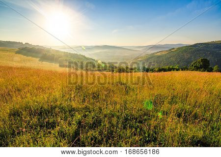 mountain summer landscape. meadow meadow with tall yellow grass and forests on hillside in morning light