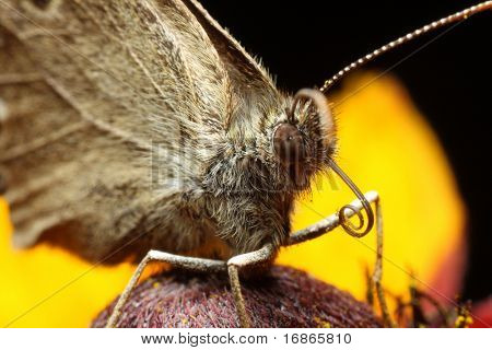 Butterfly - closeup