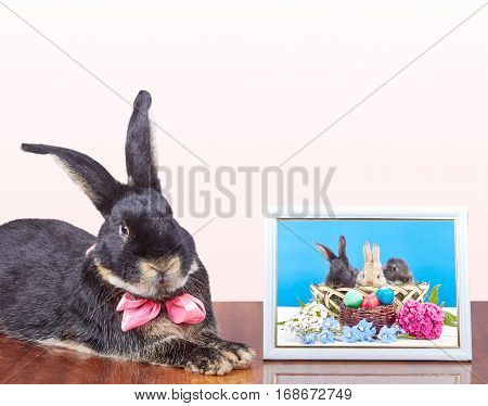 Near the photos with the rabbits in the basket is a rabbit with a bow