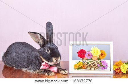 On a pink background rabbit lies near the frame with photo and flowers