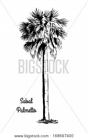 Vector sketch illustration. Black silhouette of Sabal Palmetto isolated on white background. Cabbage Palm drawing. Tropical flora native to USA, Cuba, Bahamas. Official state tree of Florida and South Carolina.