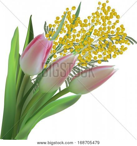 illustration with pink tulip and mimosa flowers isolated on white background