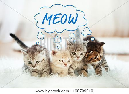 Cute kittens at home and word MEOW on background