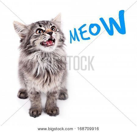 Cute kitten and word MEOW on white background