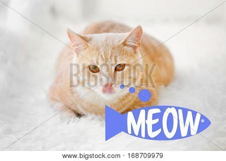 Cute cat lying on rug at home and word MEOW on background