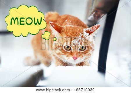 Cute cat on snow outdoor and word MEOW on background