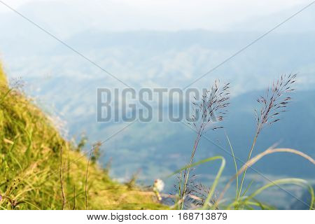 Flower grass on high mountain at viewpoint of Phu Chi Fa Forest Park in Chiang Rai Province Thailand for background