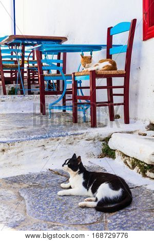 Traditional Greece series - cats and street tavernas, Amorgos is