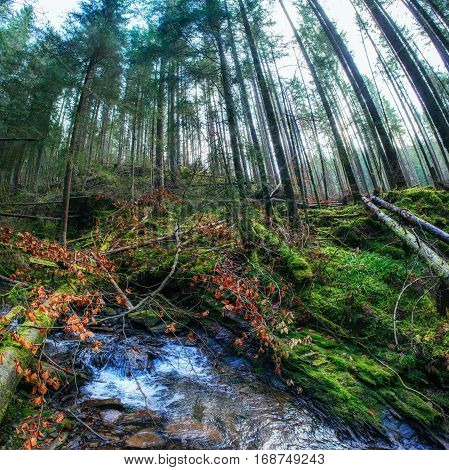 River in the mountain forest, fallen trees and moss on it
