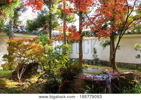 Japanese garden with red maple foliage