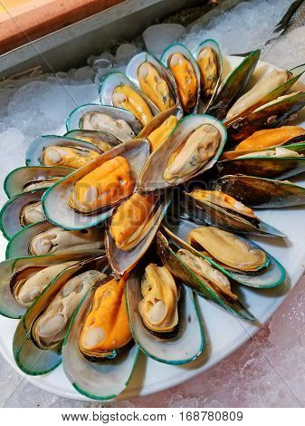 Close up of mussels on white dish (Shellfish)