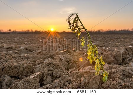 Warm orange sunset over farmland with single plant