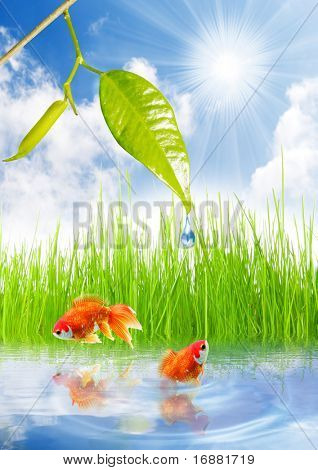 Two goldfish in garden pond. poster