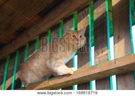 Cat On Top Of A Log