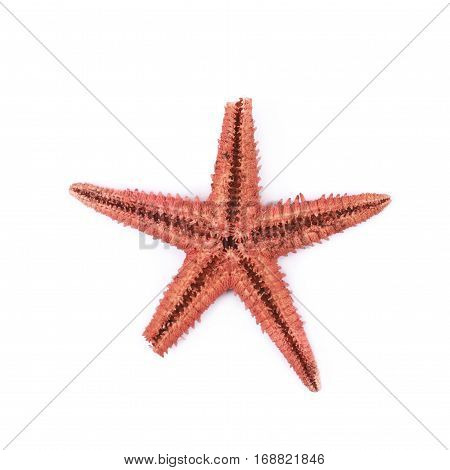 Dried decorational star fish isolated over the white background
