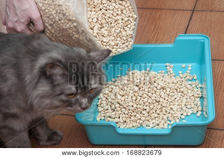 cat in toilet tray box with absorbent litter