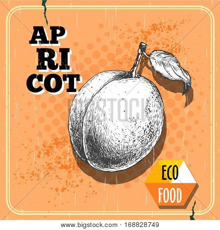 Hand drawn apricot retro poster. Sketch style organic apricot fruit illustration on vintage half tone background. Eco food vector.