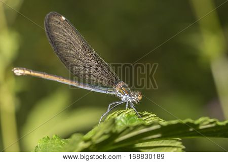 Dragon fly resting on green flower , soft background