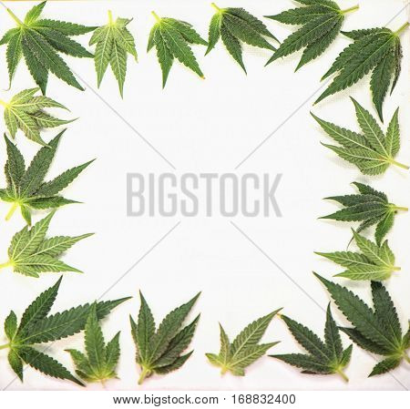 Small cannabis leaves forming a frame isolated over white background - medical marijuana concept