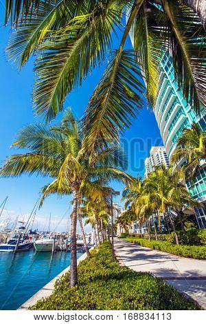 View of the marina in Miami Florida