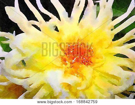 Extra Beautiful yellow spider Mum Painting