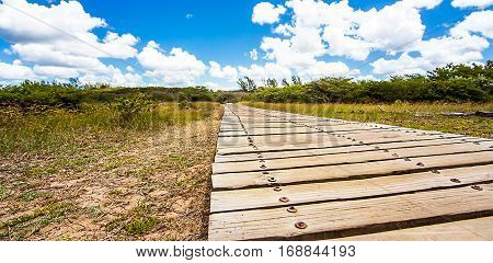 Wooden path on the San Lucia River South Africa