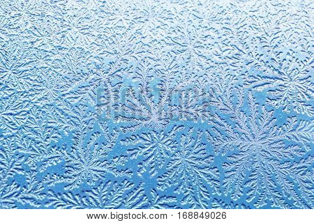 macro shot of bacterial pattern of Bacillus subtilis like a frost
