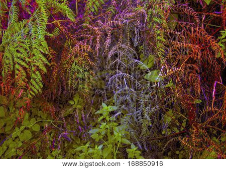 Thickets of ferns.Abstract background in purple color. Beautiful pattern.