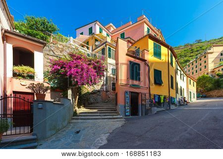 Picturesque view of colorful houses in Manarola fishing village in Five lands, Cinque Terre National Park, Liguria, Italy.