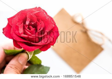 Red rose flower Valentine's day and Sweetest day Holiday background with copy space.