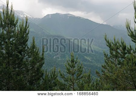 Mountains and forest. Pine trees and mountains. Impending storm. Forest. Bluish haze.
