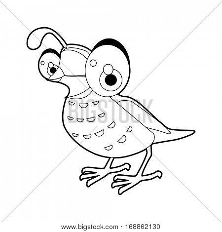 Cute funny cartoon style coloring bird illustration. Quail
