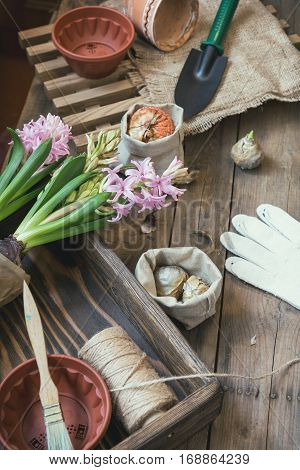 Seedlings Garden Tools Bulbs Gladiolus Hyacinth