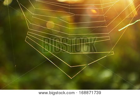 Refraction of sunlight on the lines of spider web