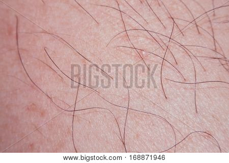 Human skin texture with black hairs on the skin