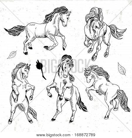 Set of hand drawn black and white sketch of horses. Vector vintage design elements, outline drawing collection